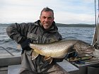 siven obrovsky - namaycush - lake trout